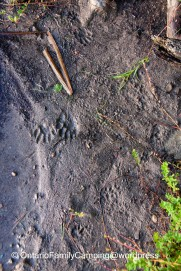 Follow animal tracks